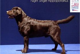Single Hippopotamus night loe - Nice / Nice