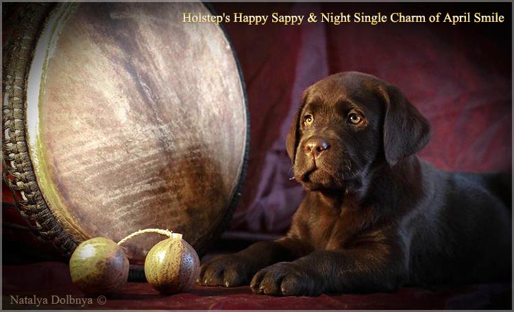 puppies_sappy_lala57