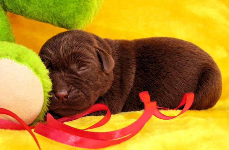 puppies_prosha
