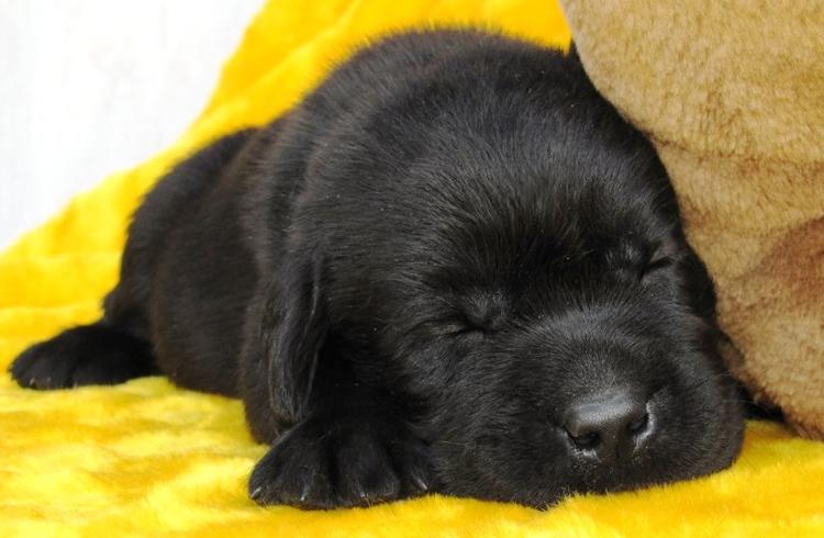 puppies_prosha1