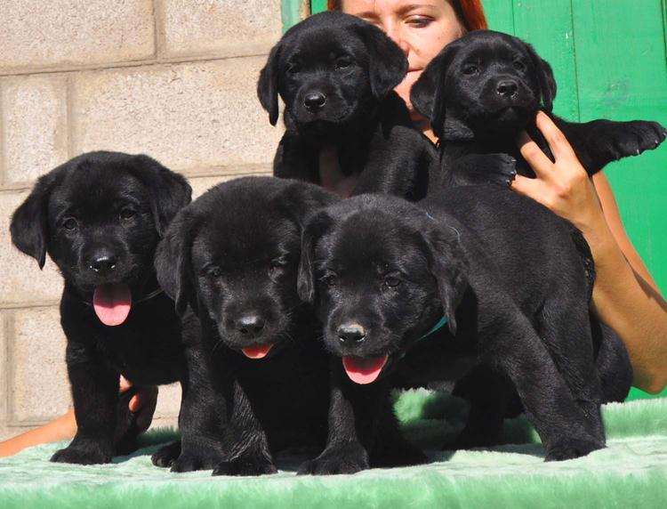 puppies_prosha2
