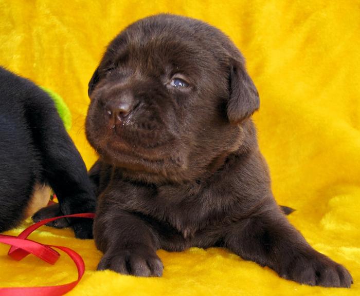 puppies_prosha6