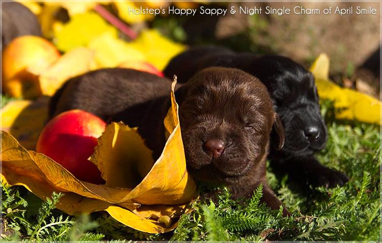 puppies_sappy_lala12