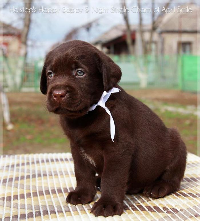 puppies_sappy_lala13