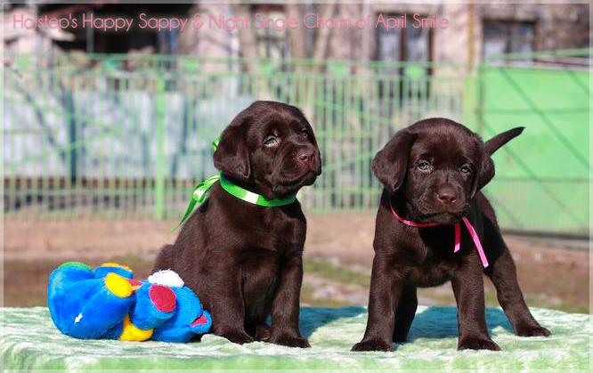 puppies_sappy_lala14