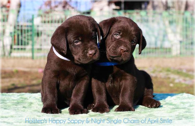 puppies_sappy_lala20