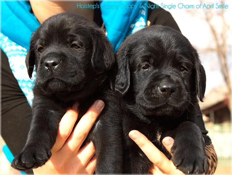 puppies_sappy_lala25