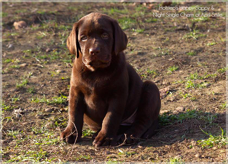 puppies_sappy_lala33