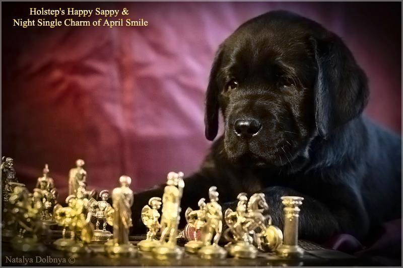 puppies_sappy_lala52