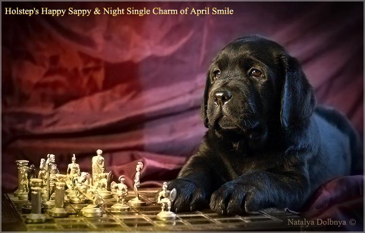 puppies_sappy_lala56