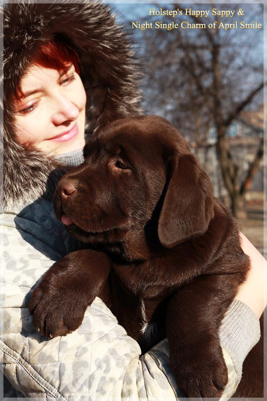 puppies_sappy_lala61