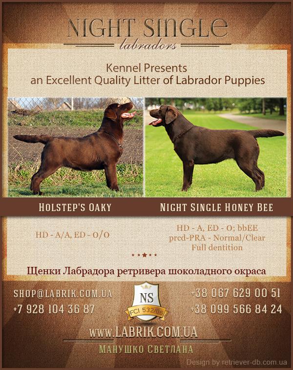 puppies_silva_oaky1